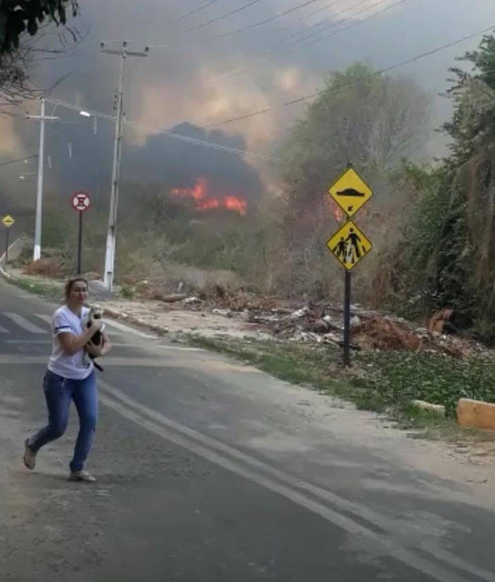 Voluntários resgatam animais em área em chamas no Ceará (Foto: Mateus Ferreira/TV Verdes Mares)