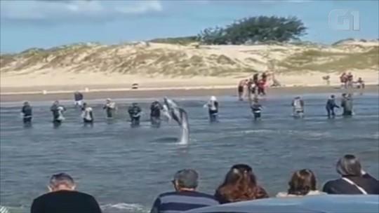 Boto salta no Rio Tramandaí e empolga turistas; veja o vídeo