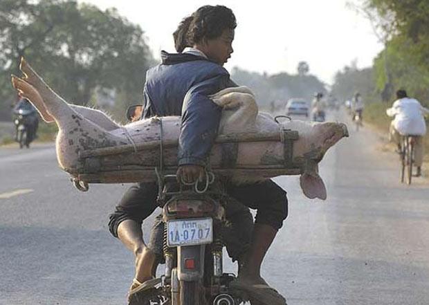Em fevereiro de 2009, um homem foi flagrado transportando um porco vivo em sua moto na localidade de Moung Russey, na província de Battambang, no Camboja. O animal era carregado por outro jovem que estava na garupa. (Foto: Adrees Latif/Reuters)