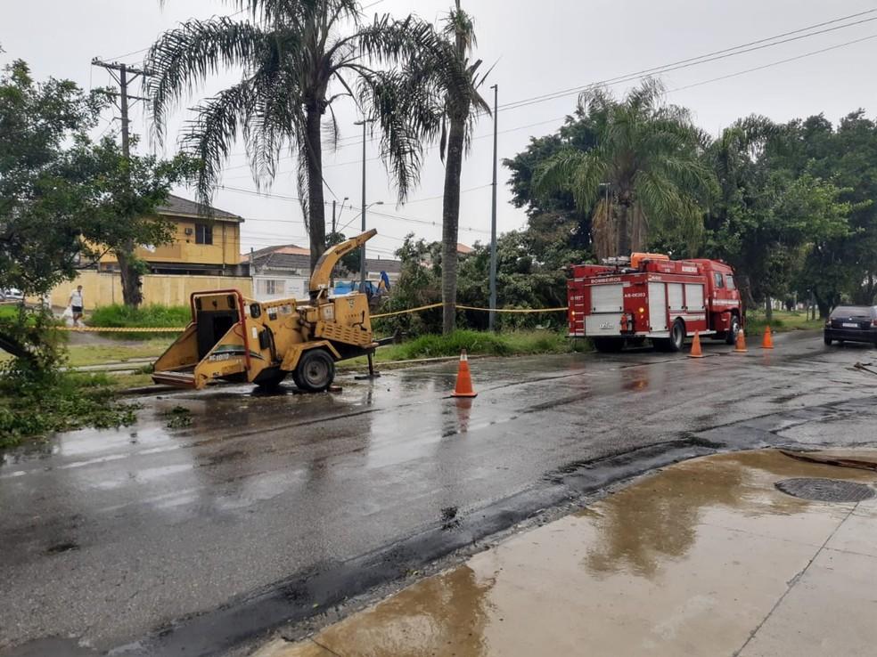 Árvore caiu e paralisou as operações do VLT, em São Vicente, SP — Foto: Nina Barbosa/G1