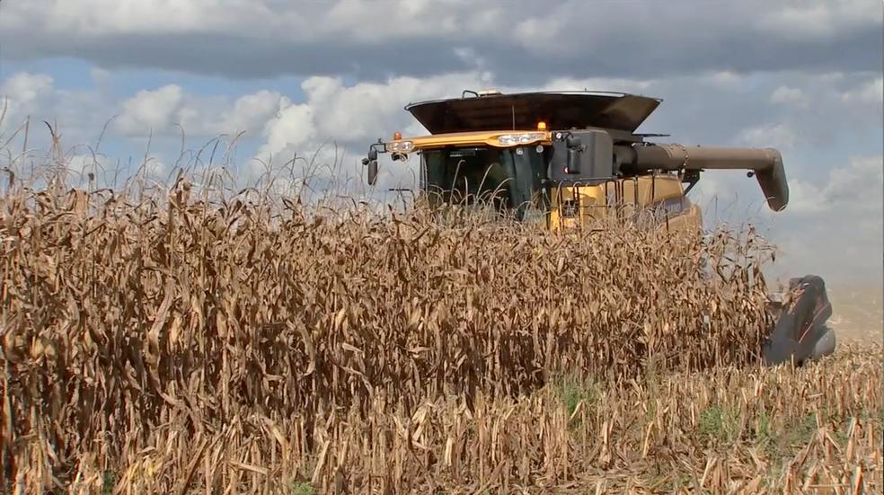 Mato Grosso colheu 19 milhões de toneladas de milho em 2016; previsão é colher 28 milhões de toneladas em 2017 — Foto: Reprodução/TVCA