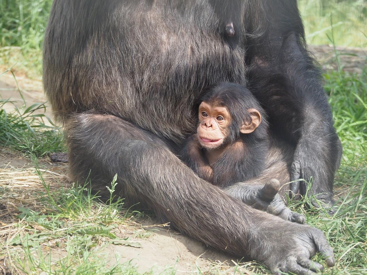 Mamãe! Olha como aquela bunda é feia! (Foto: Pixabay/Domínio Público)