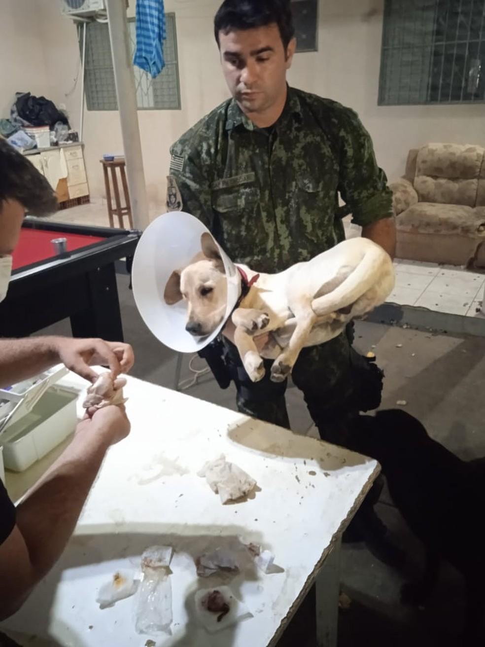Polícia Ambiental resgatou o cachorro que foi castrado em uma república de estudantes em Presidente Prudente — Foto: Polícia Ambiental