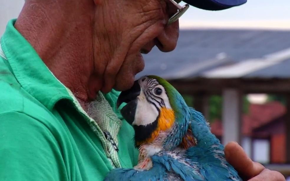 Valdir Ferreira da Costa virou avô de araras em Quirinópolis — Foto: Reprodução/TV Anhanguera