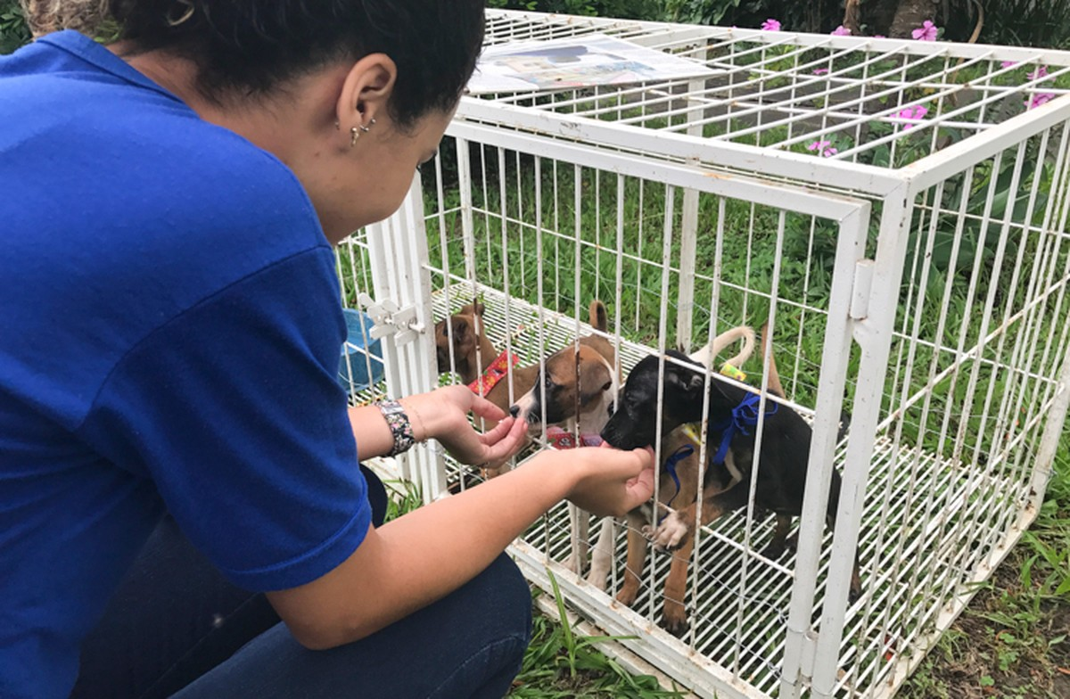 Projeto que oferece vacinação, adoção e castração de animais será realizado nesta terça em Campos, no RJ