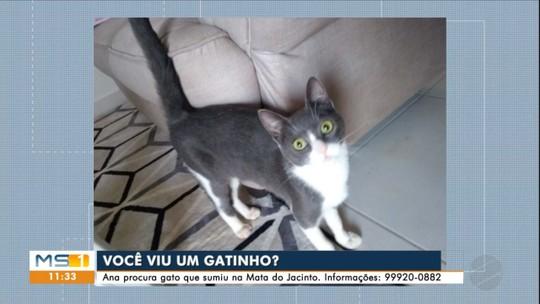 Família procura gatinho que se perdeu na Mata do Jacinto