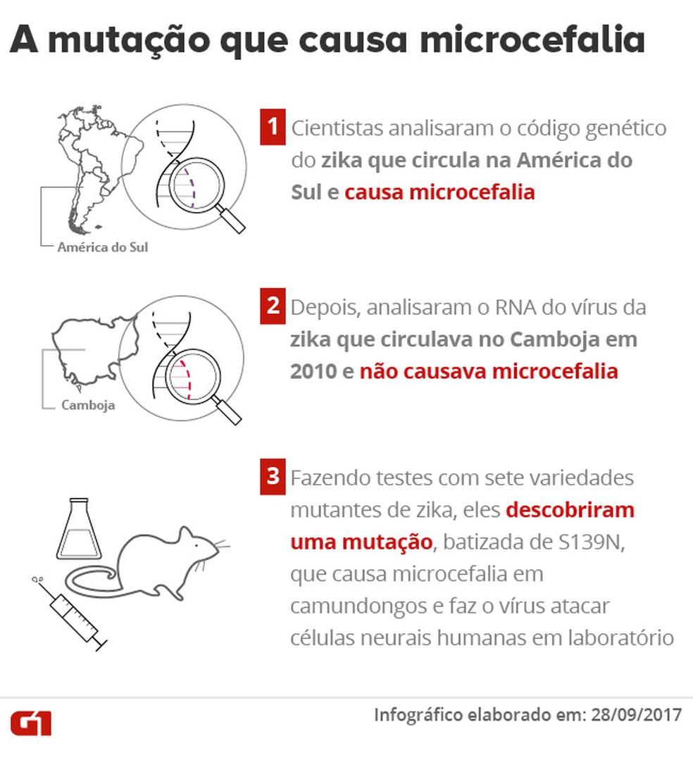Mutação que causa microcefalia (Foto: Editoria de Arte/G1)