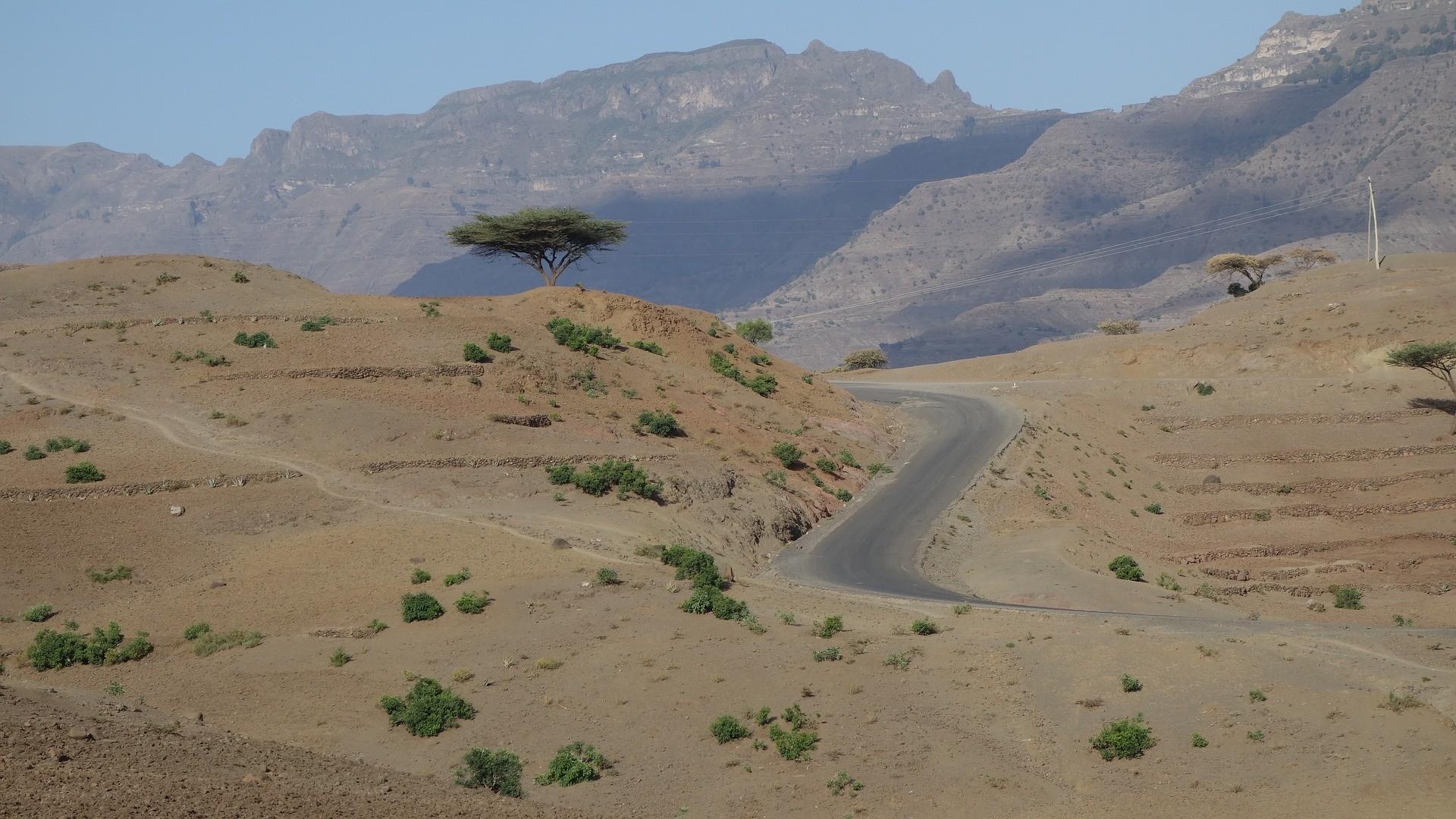 No início dos anos 2000, a Etiópia só tinha 4% de cobertura florestak (Foto: G. Lerz/Pixabay)