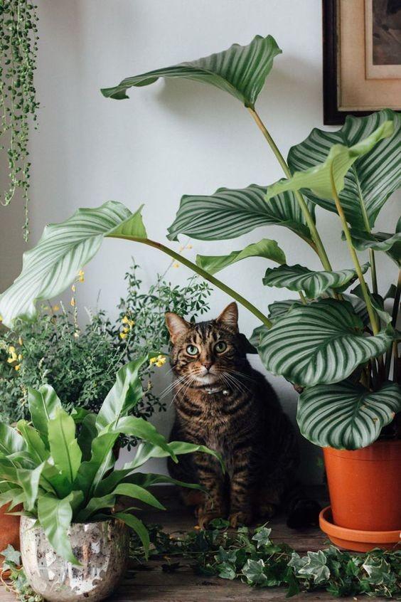 Plantas seguras para gatos: descubra quais espécies não são tóxicas - Casa Vogue | Paisagismo