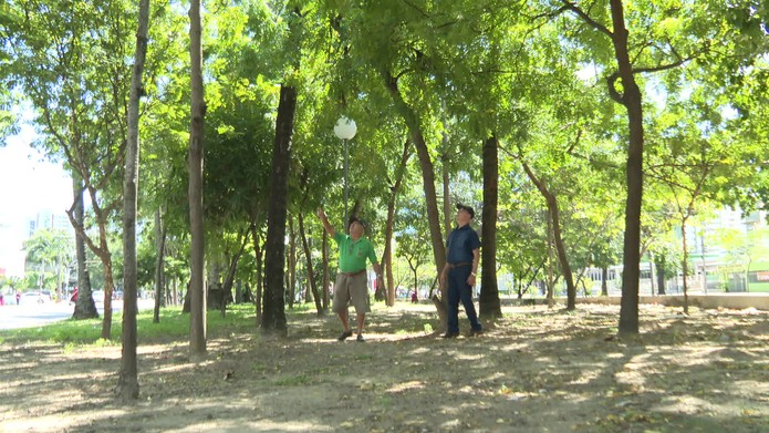 Seu Luiz plantou mais de 200 árvores onde mora, no bairro de Boa Viagem, na Zona Sul do Recife — Foto: Reprodução/TV Globo