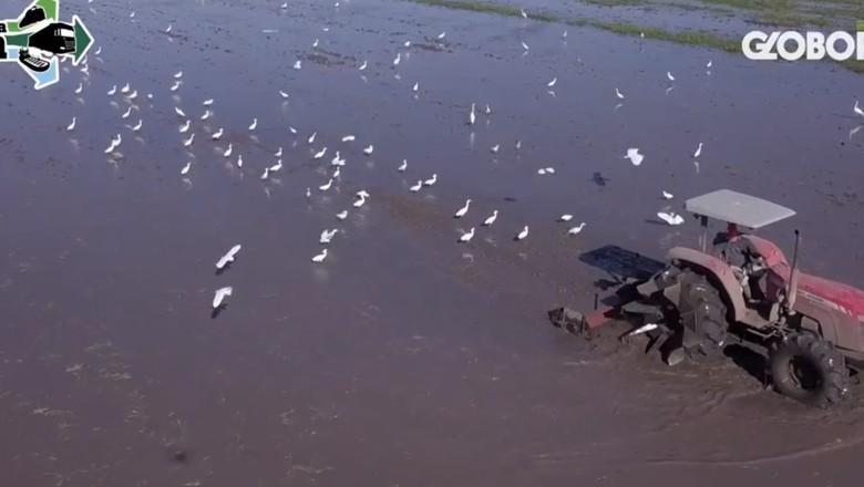 Caminhos da Safra print do video (Foto: Globo Rural)