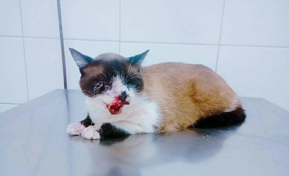 ONG precisa de ajuda para pagar tratamento de gata com o maxilar quebrado (Foto: Simone Silva/Arquivo Pessoal)