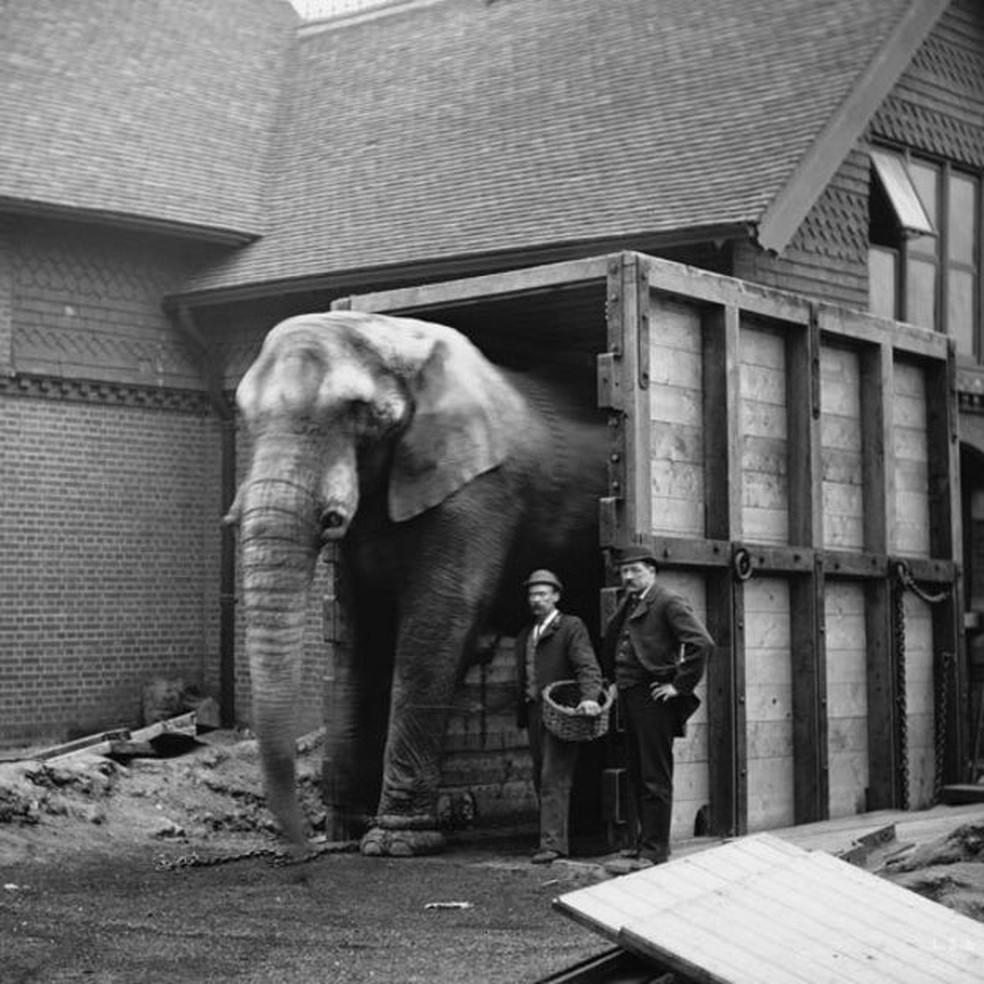 O cuidador de Jumbo, Matthew Scott, foi a única pessoa que conseguiu acalmar o elefante para embarcar no navio rumo aos Estados Unidos  (Foto: Wiki Commons)
