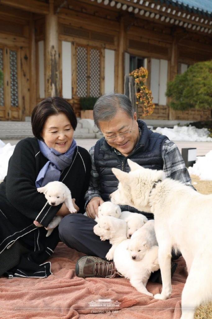 Presidente da Coreia do Sul sugere banir consumo de carne de cachorro