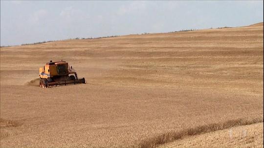 Colheita decepciona e produção de trigo no Paraná pode ser 18% menor