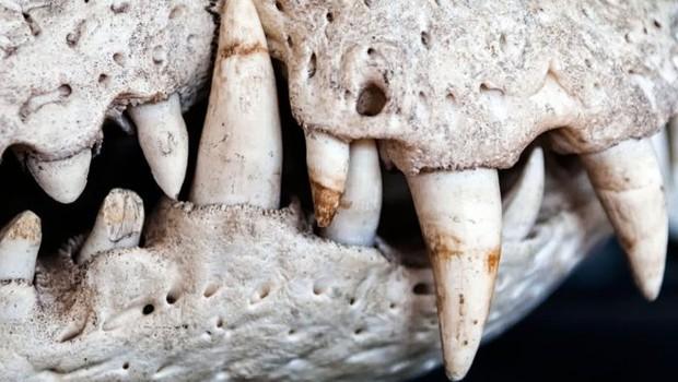 Paleontólogos lamentam a perda de amostras raras - caso de um fóssil quase completo de um pequeno crocodilo - que ainda seriam identificadas (Foto: Getty Images via BBC)