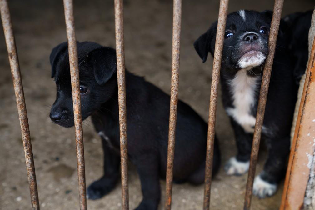 Animais abandonados ficam vulneráveis nas ruas; ONGs atuam no resgate e processo de adoção — Foto: Marcelo Brandt/G1