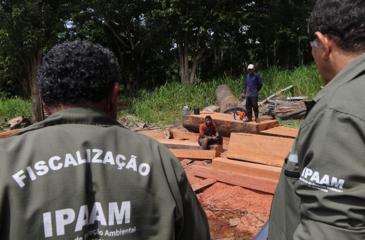 Ipaam flagra extração ilegal de madeira em lago de Iranduba, no AM