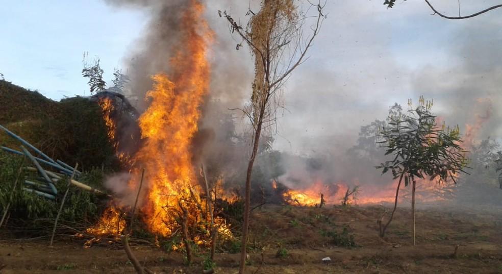 Toda a maconha encontrada foi incinerada no local. — Foto: Polícia Militar