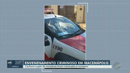 Suspeito de envenenar animais em Iracemápolis é levado para delegacia após denúncia