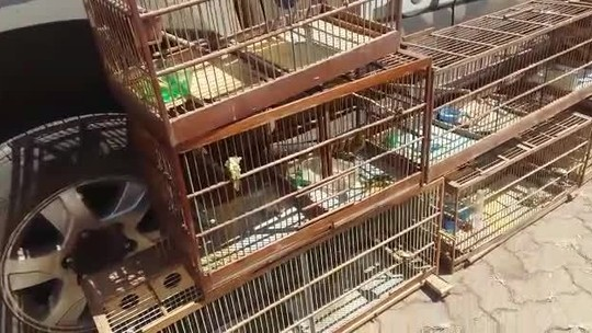 Pássaros silvestres são resgatados de cativeiro irregular em Ceilândia, no DF