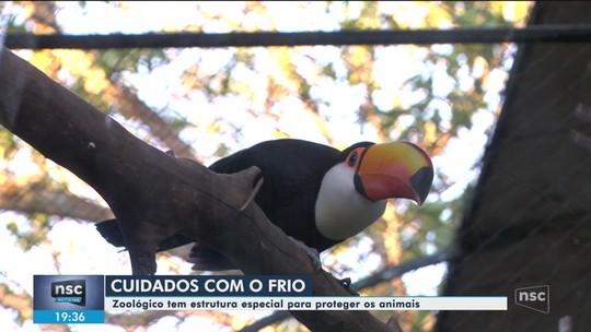 Zoológico de SC usa aquecedores e mudanças na alimentação para proteger animais do frio