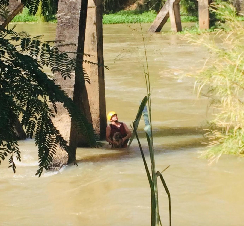 Cachorro é resgatado após ficar ilhado no Rio Paraíba em Lavrinhas; VÍDEO