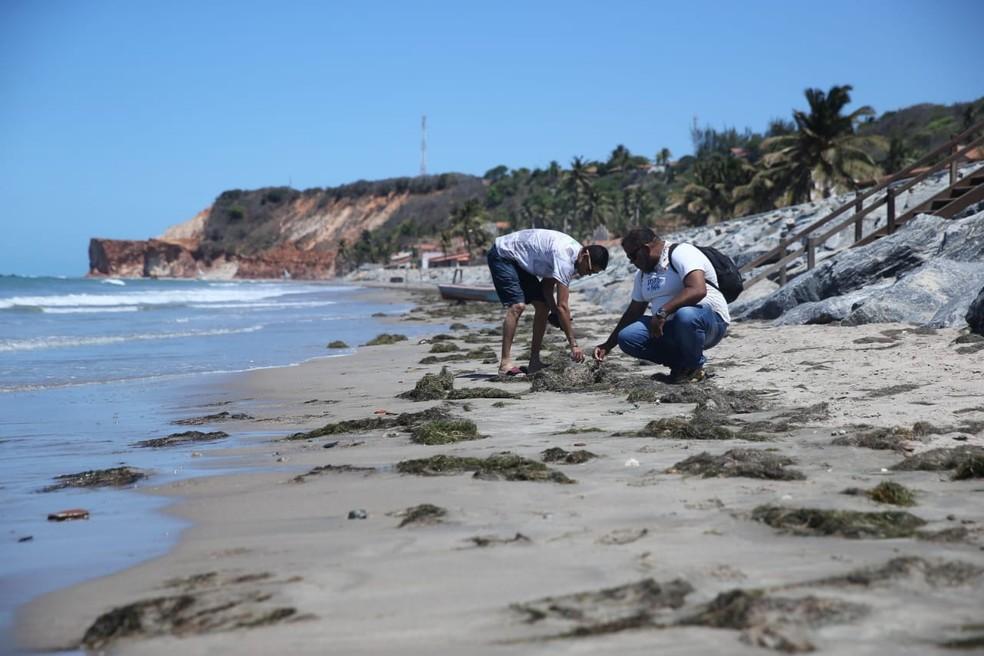Especialista avalia que ainda há muito óleo à deriva no mar — Foto: Helene Santos/SVM