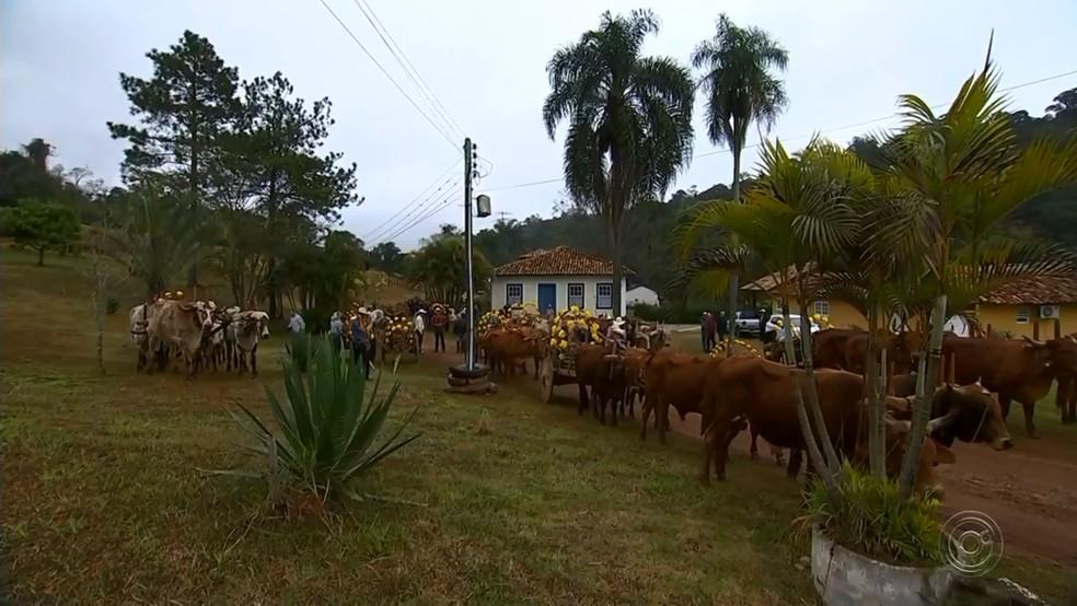 Todo ano, os carreiros se encontram em um sítio de São Roque de onde saem os carros para a cidade.  (Foto: Reprodução/TV TEM)