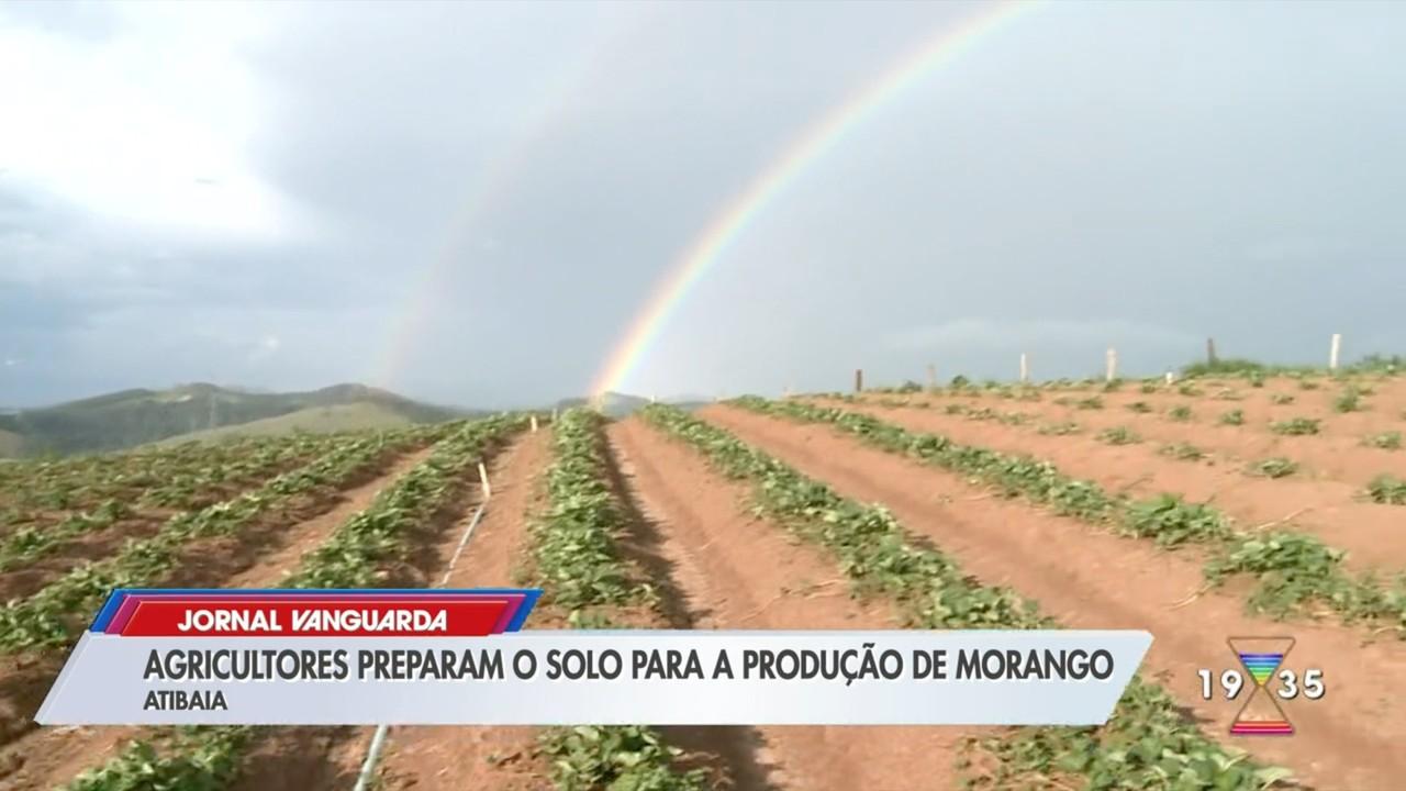 Agricultores preparam solo para produção de morangos em Atibaia