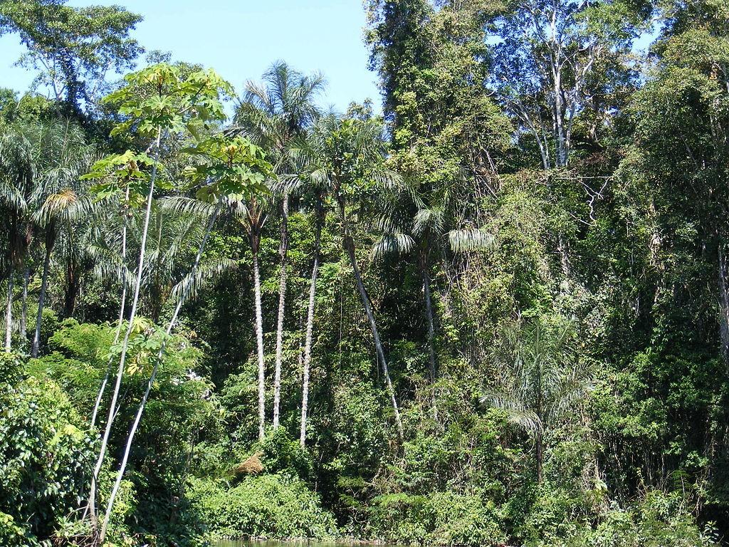 Floresta Amazônica não acompanha as mudanças climáticas (Foto: Wikipedia / Shao)