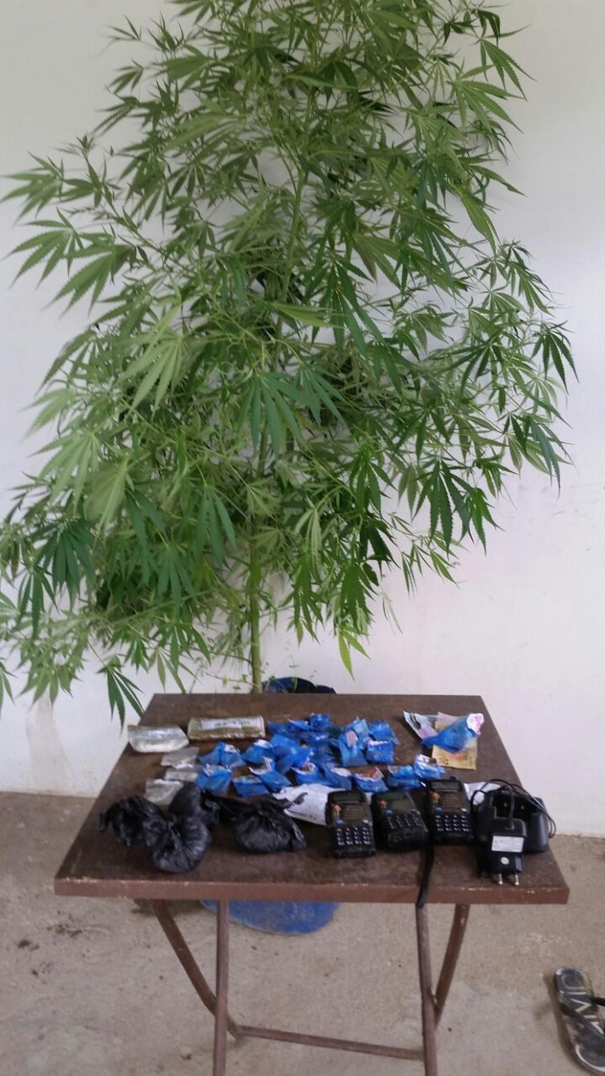 Mulher é detida com arbusto de maconha, cocaína e radiotransmissores em Macaé, no RJ