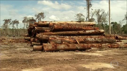 Justiça não condenou nenhum desmatador da Amazônia investigado pelo MPF nos últimos cinco anos