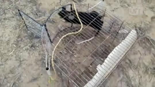 Gambá é encontrado e resgatado dentro de piscina em Miracema, no RJ