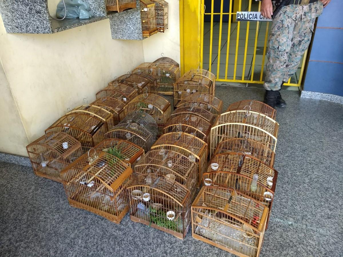 Polícia Ambiental apreende 30 pássaros durante torneio em São José de Ubá, no RJ