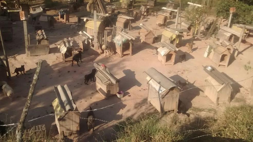 Cachorros vivem em área que servia para moradores manobrarem carros (Foto: Sidneia da Silva Vieira/Arquivo Pessoal)