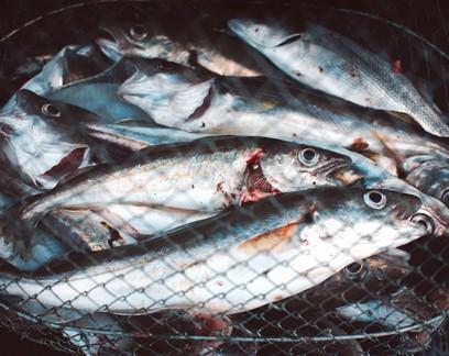 Pesca de arrasto está suspensa temporariamente no litoral do RS