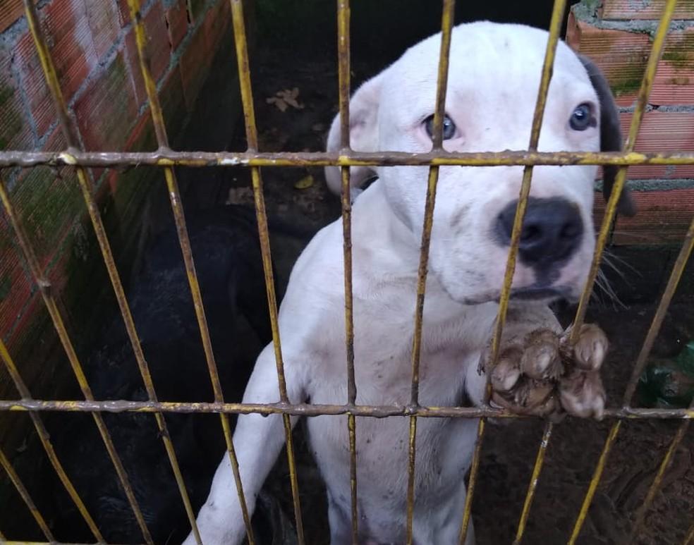 Cachorro é resgatado de canil ilegal em Mauá, na Grande SP — Foto: Divulgação/Prefeitura de Mauá