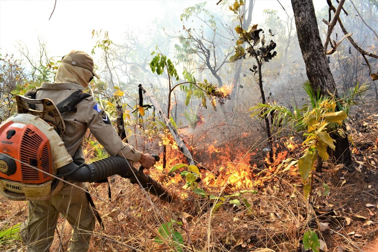 Polícia diz que responsabilizou mais de 80 pessoas por queimadas no Tocantins em 2019 - Notícias - Plantão Diário
