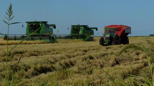 Excesso de chuva prejudica plantio de arroz e preocupa produtores do RS