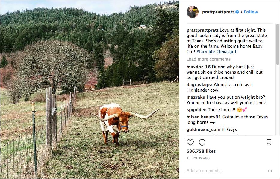 O post no qual o ator Chris Pratt expõe seu amor pela vaca recém-comprada por ele (Foto: Instagram)