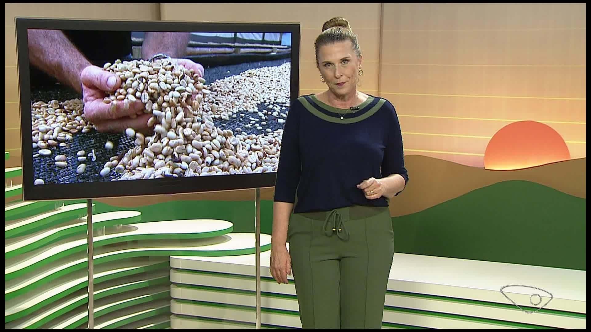 VÍDEOS: Jornal do Campo deste domingo, 27 de setembro