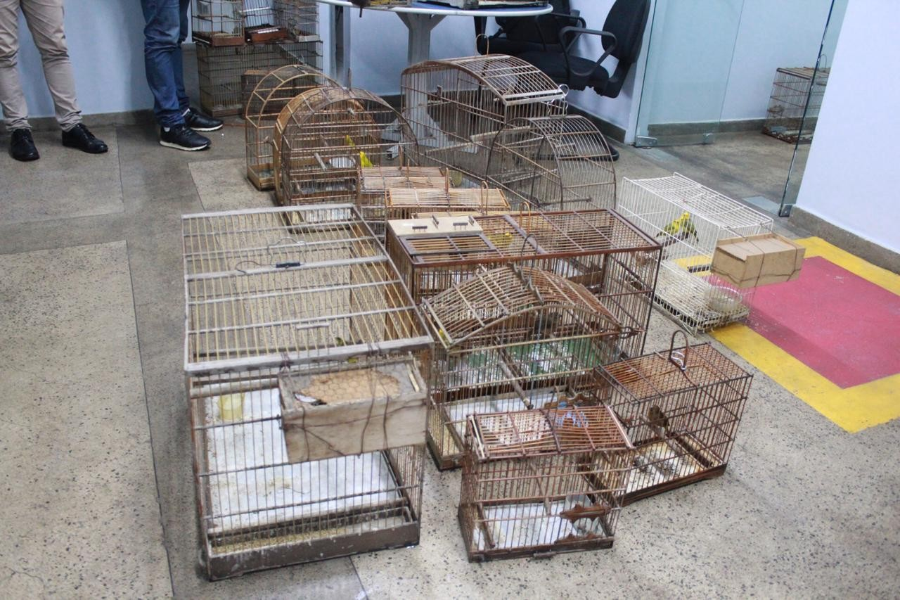 Homem é detido com 21 aves silvestres, gaiolas e armadilhas em casa na Zona Sul de Manaus - Notícias - Plantão Diário