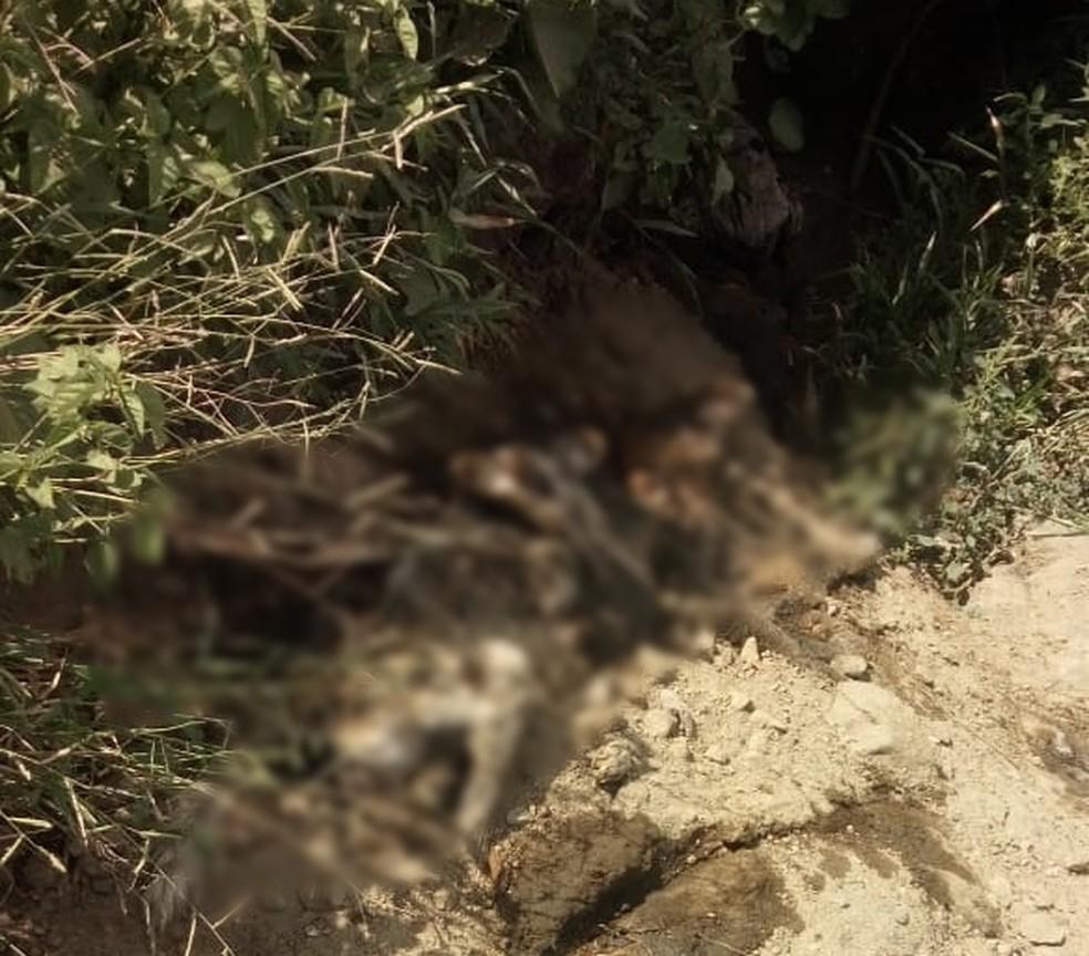 No local, há cadáveres de vários animais, incluindo caninos, equinos, bovinos e caprinos — Foto: Solange Santos