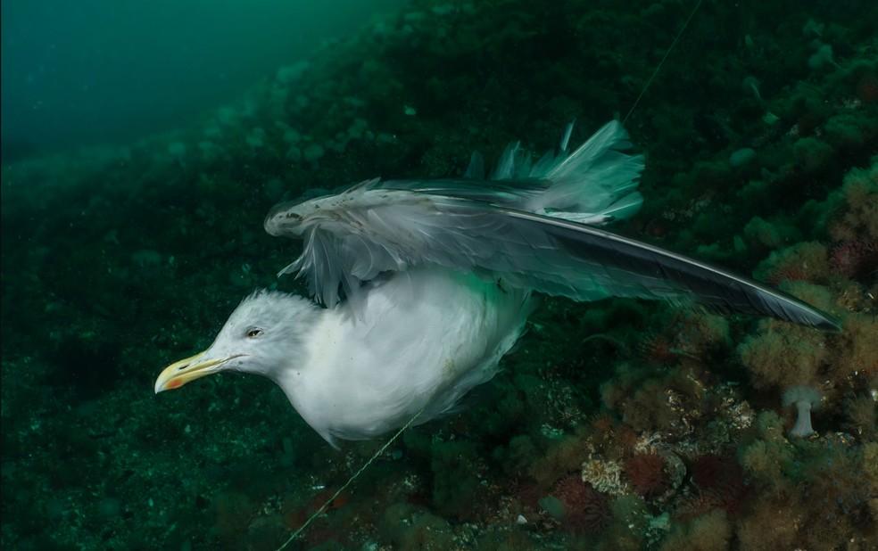 A gaivota e a linha de pesca fantasma. Fotografia venceu o 2° na categoria 'conservação' — Foto: Ocean Photography Awards   Galice Hoarau
