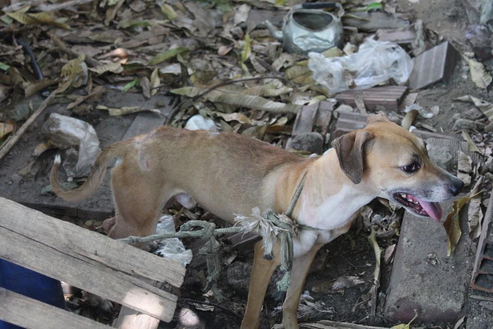 Alguns animais apresentavam sinais de desnutrição (Foto: Rickardo Marques/G1 AM)