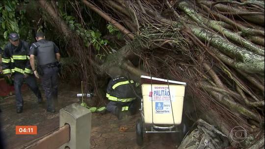 Mulher morre durante após queda de árvore em São Vicente (SP)