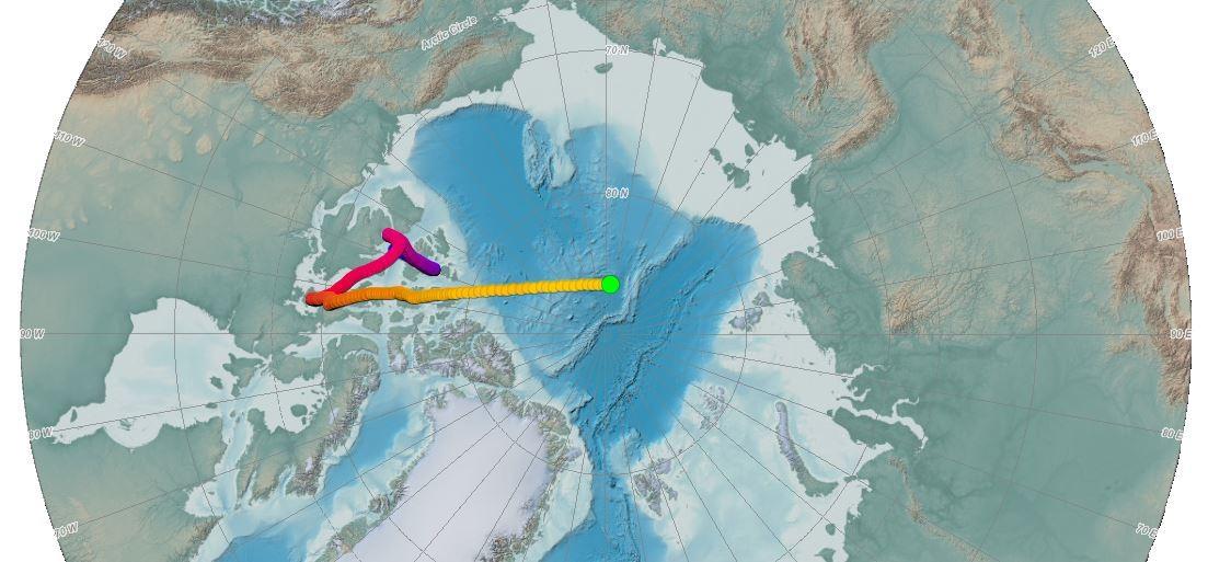A trajetória do Pólo Norte magnético desde 1590 até hoje.  (Foto: NOAA)