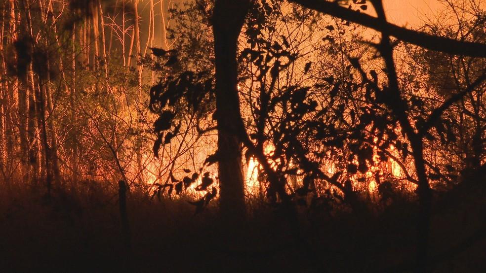 Fogueira acesa por adolescentes causam incêndio na Floresta Nacional de Brasília — Foto: TV Globo/Reprodução