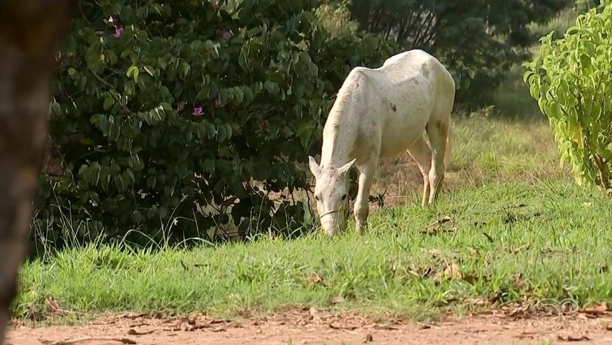 Animais de médio e grande porte passam a ser recolhidos das ruas em Formiga